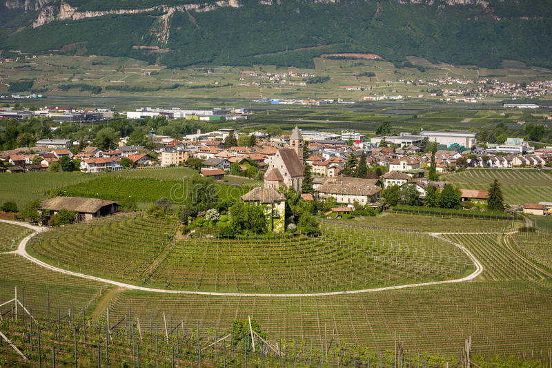 典型圆葡萄园在南蒂罗尔, Egna,波尔查诺,酒路的意大利 免版税库存照片