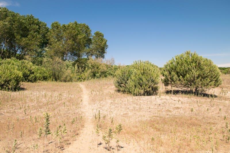 典型的地中海植被组成由灌木和灌木n 库存图片