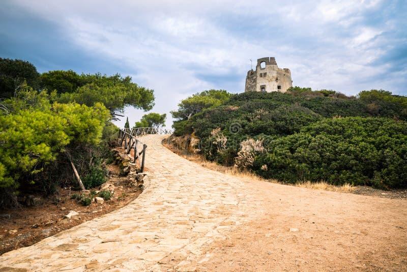 典型的地中海植被组成由灌木和灌木n 免版税库存照片
