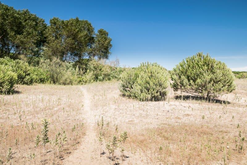 典型的地中海植被组成由灌木和灌木n 免版税库存图片
