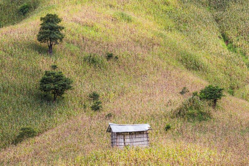 典型的山农业用玉米成长在一座山的陡峭的边与一点棚子的 免版税库存照片
