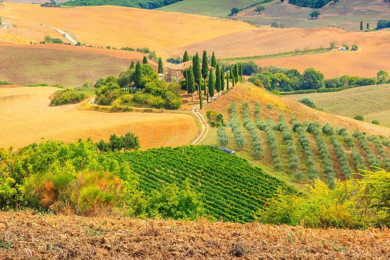 典型的托斯卡纳风景,圣Quirico d'Orcia,意大利,欧洲 免版税库存照片
