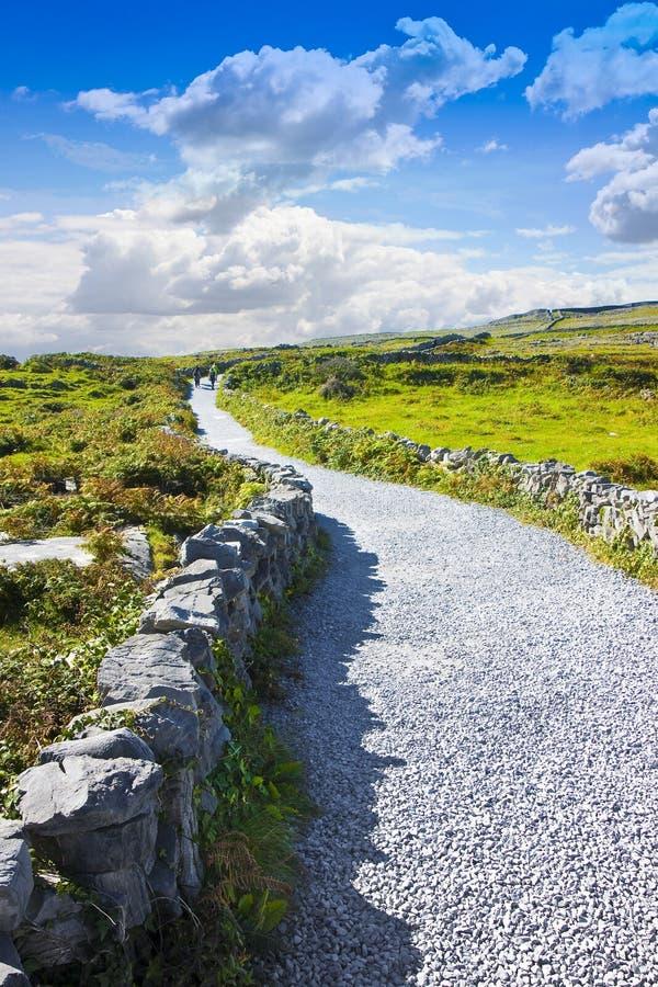 典型的爱尔兰平的风景在有乡下公路、草的石墙和领域的Aran海岛吃草的动物爱尔兰- 免版税图库摄影