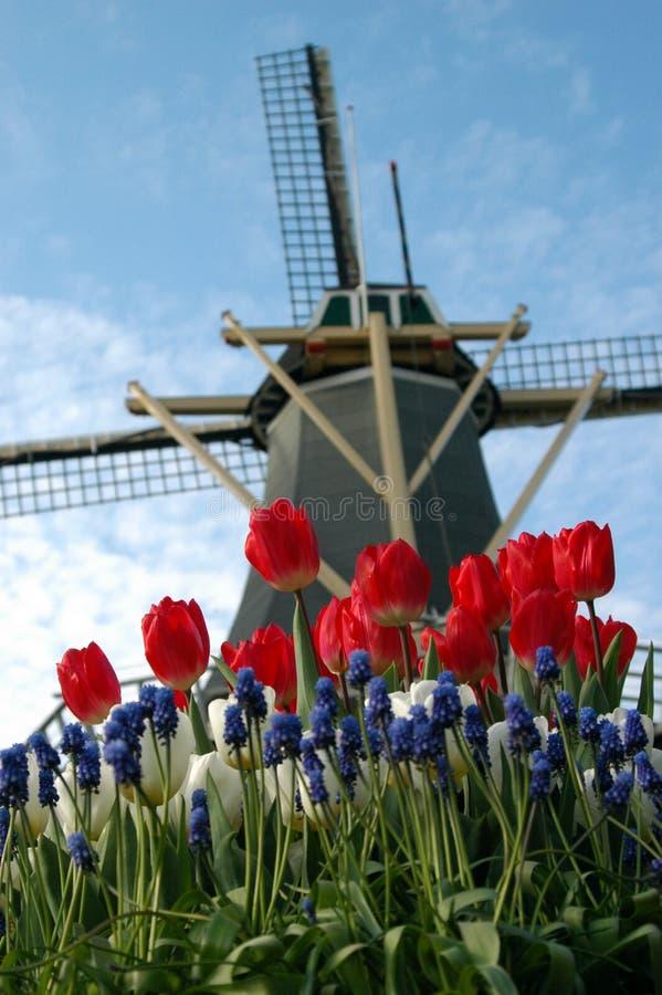典型的荷兰语 免版税库存图片