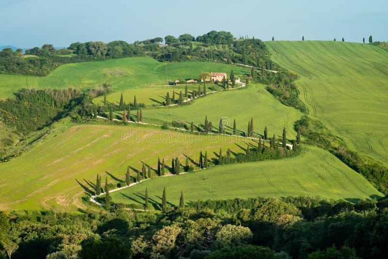 典型的路标示用柏树在托斯卡纳,意大利 库存照片
