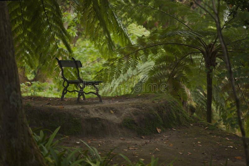 经典老古色古香的长凳在植物园里 免版税图库摄影