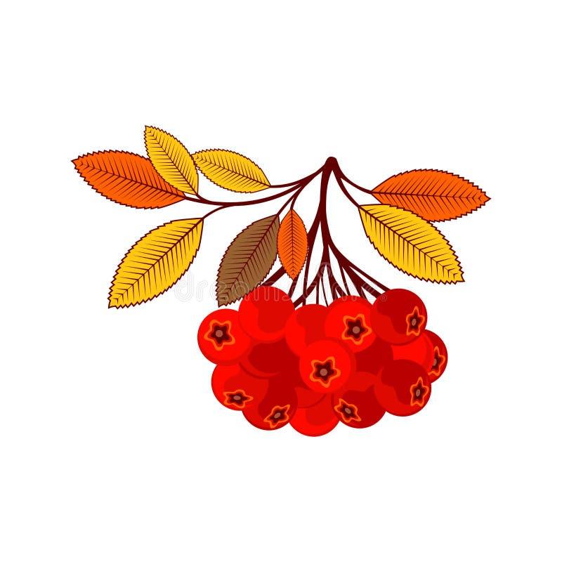 典雅和美好的秋叶和元素 明亮的图象为感恩天 皇族释放例证