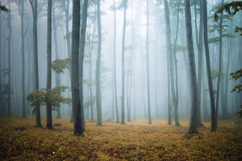典雅的森林生叶橙树 免版税库存图片
