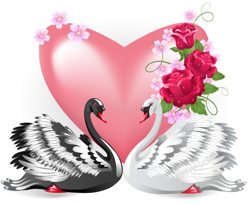 典雅的白色和黑天鹅 库存例证