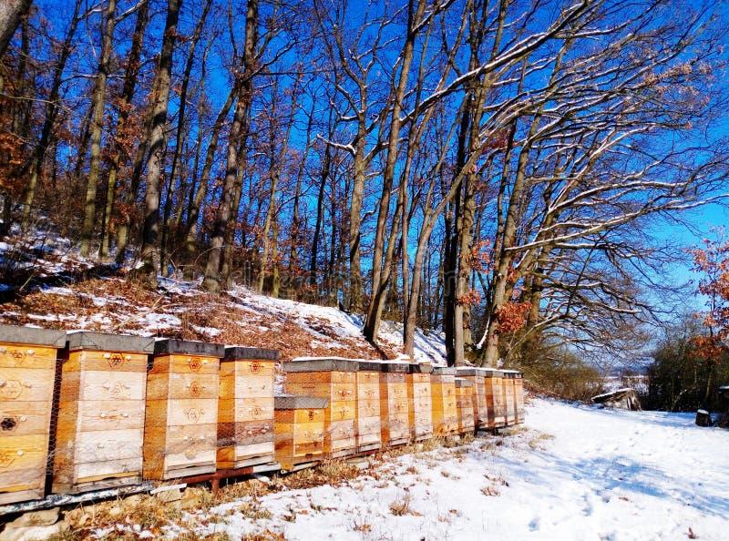 养殖蜂 免版税图库摄影