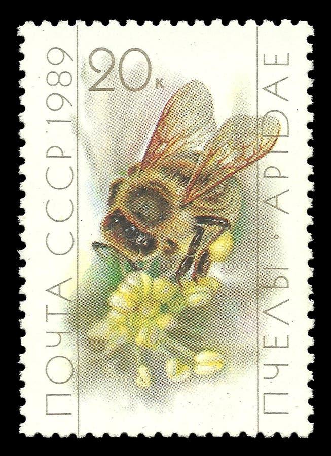 养蜂业,蜂蜜蜂, Apis mellifica 库存照片