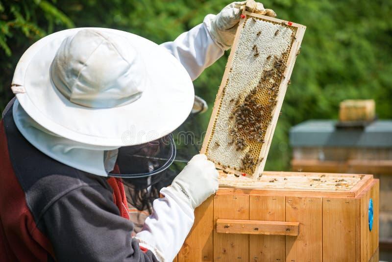 养蜂业 库存图片