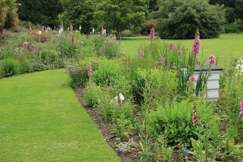 养蜂场和开花的毛地黄属植物在庭院里在春天 库存照片