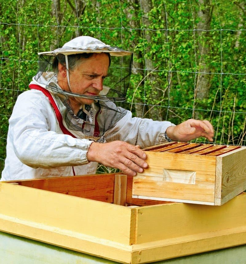 养蜂家。 免版税库存图片