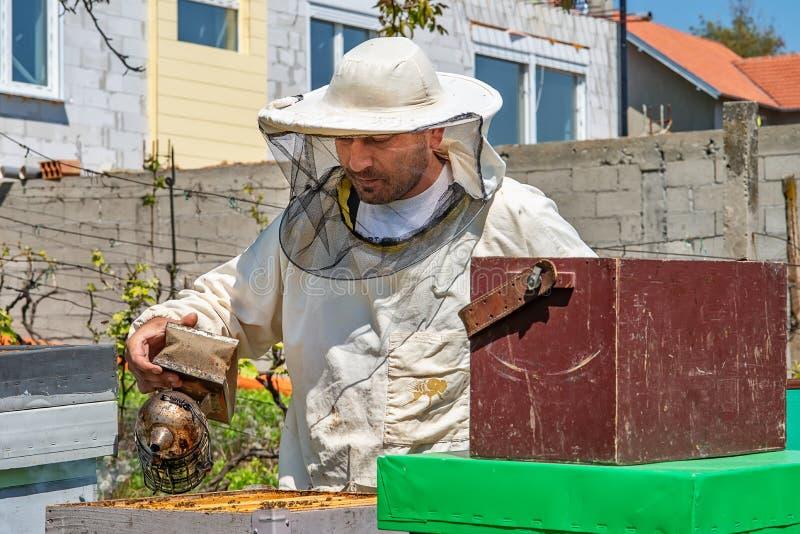 养蜂家,蜂农检查在蜂窝木制框架的蜂 蜂农在工作,清洁和检查蜂房 免版税图库摄影