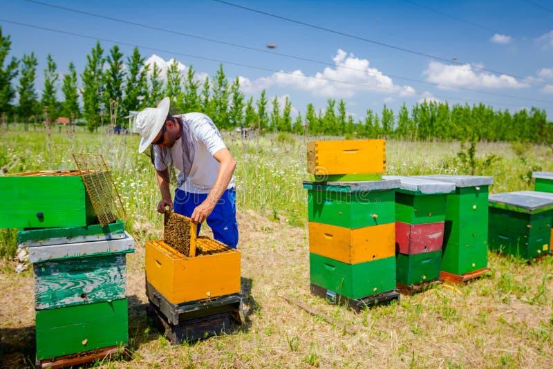 养蜂家,蜂农检查在蜂窝木制框架的蜂 图库摄影