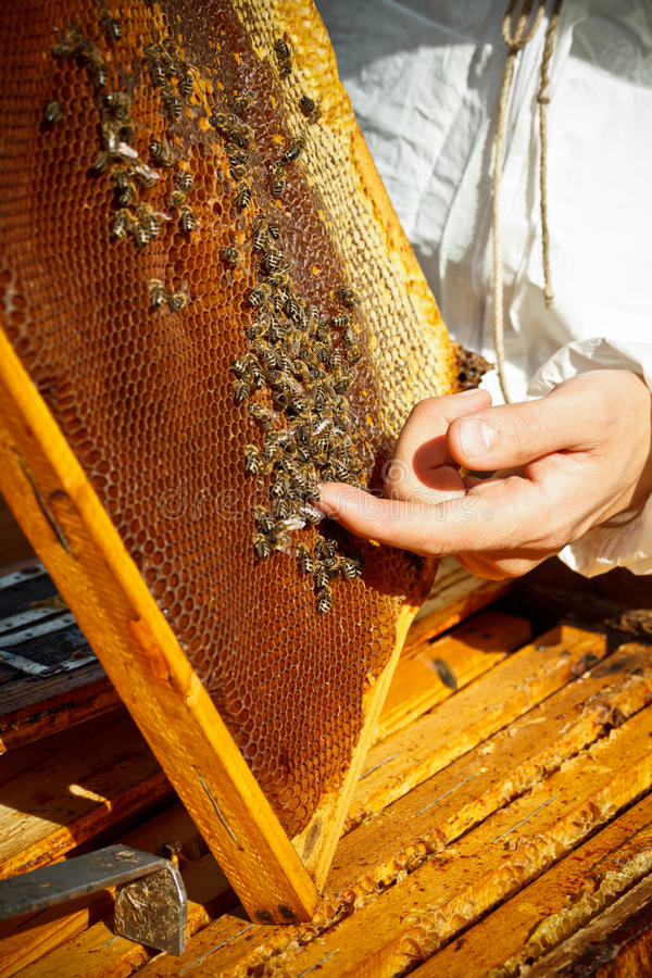 养蜂家 库存图片