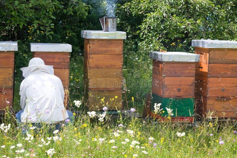 养蜂家 图库摄影