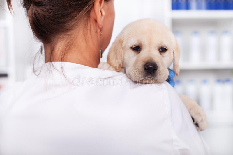 兽医医生或医疗保健专业举行的逗人喜爱的小狗 免版税库存照片