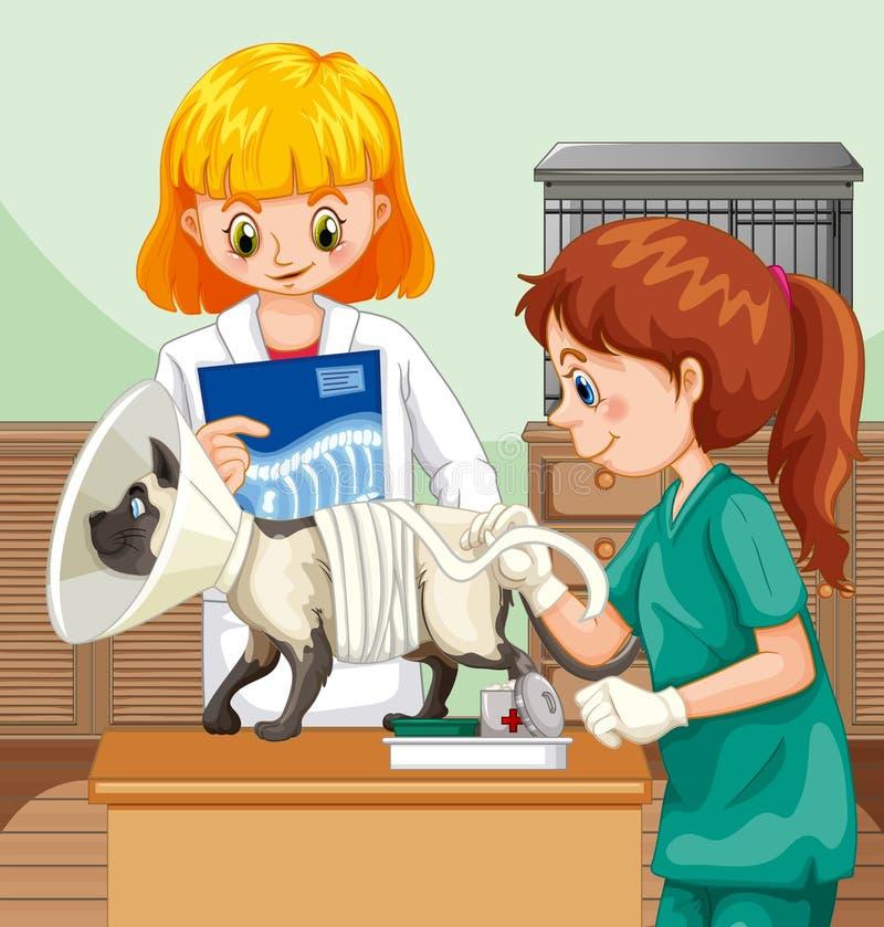 兽医医生Helping猫 向量例证