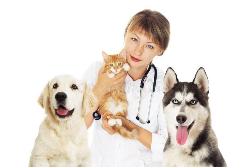 兽医和小猫和多壳的狗 免版税库存图片