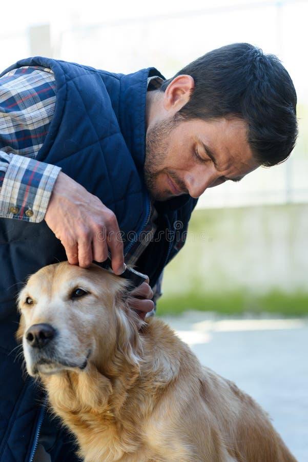 兽医在狩医诊所的医生审查的狗 免版税图库摄影