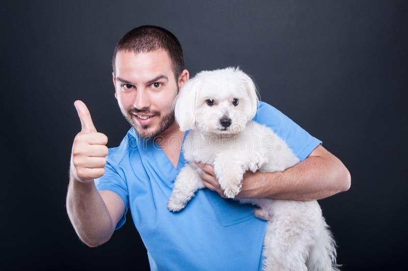 兽医佩带洗刷拿着显示象的狗 免版税库存照片