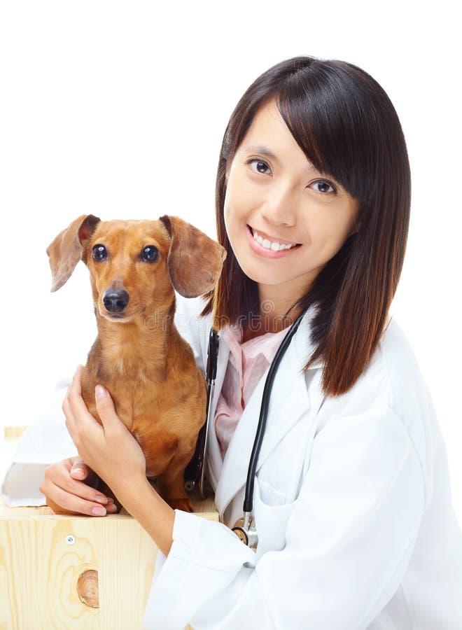 兽医和达克斯猎犬狗 库存照片