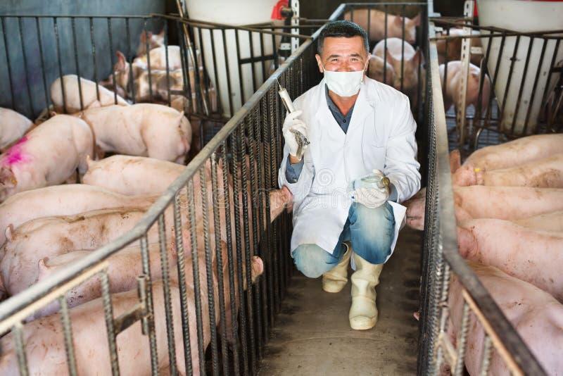 兽医在猪圈 图库摄影