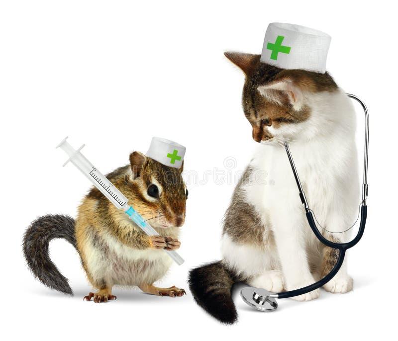 兽医概念、滑稽的花栗鼠和猫与phonendoscope a 免版税库存图片