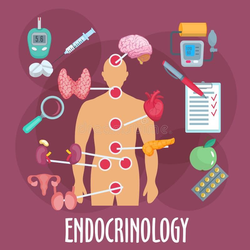 内分泌学和内分泌系统平的象 库存例证