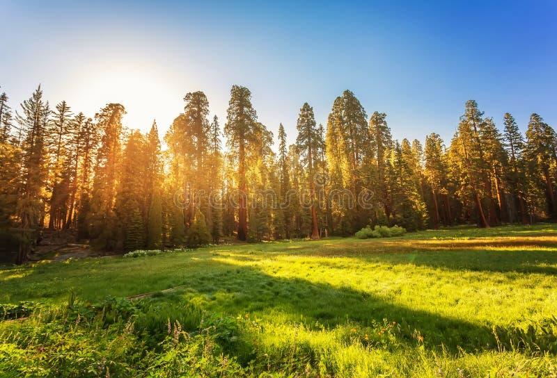 内华达山的美洲杉国家公园 免版税库存图片