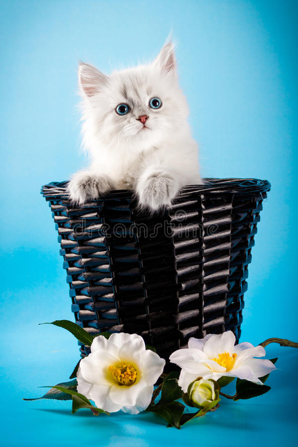 内娃在篮子的化妆舞会小猫 库存照片