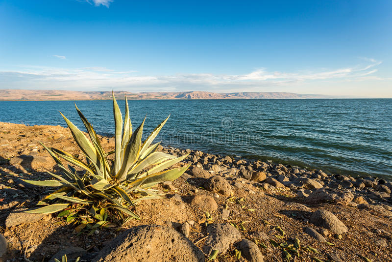 内盖夫加利利海,以色列的全景 免版税图库摄影