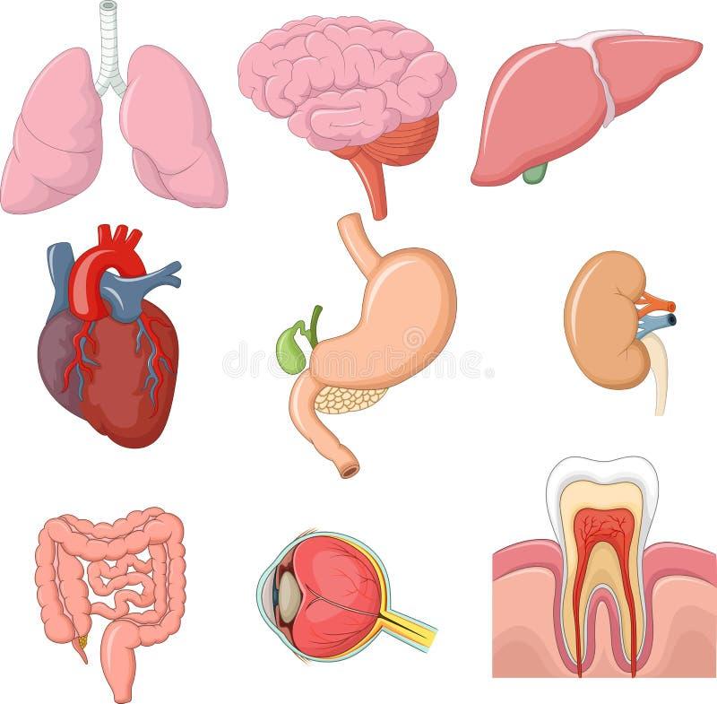 内部人体器官汇集集合的动画片例证 库存例证