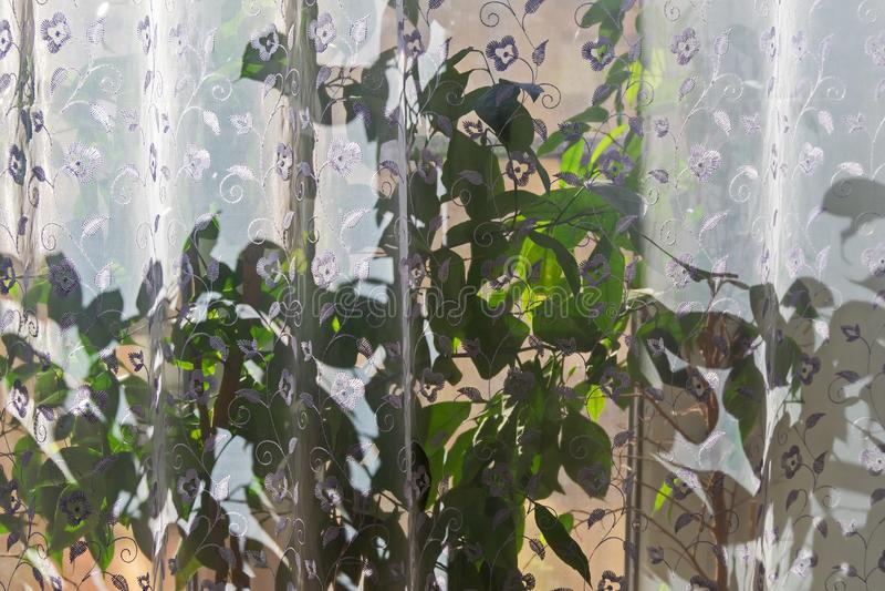 内部是3 太阳通过薄纱和花发光在窗口基石 库存照片