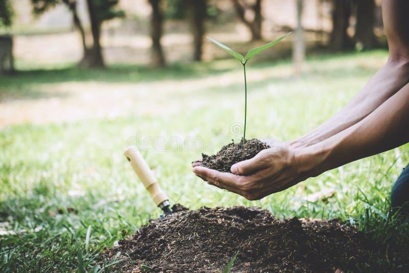 再造林的世界环境日,年轻人的手种植生长入土壤的幼木和树,当工作在时 免版税库存图片