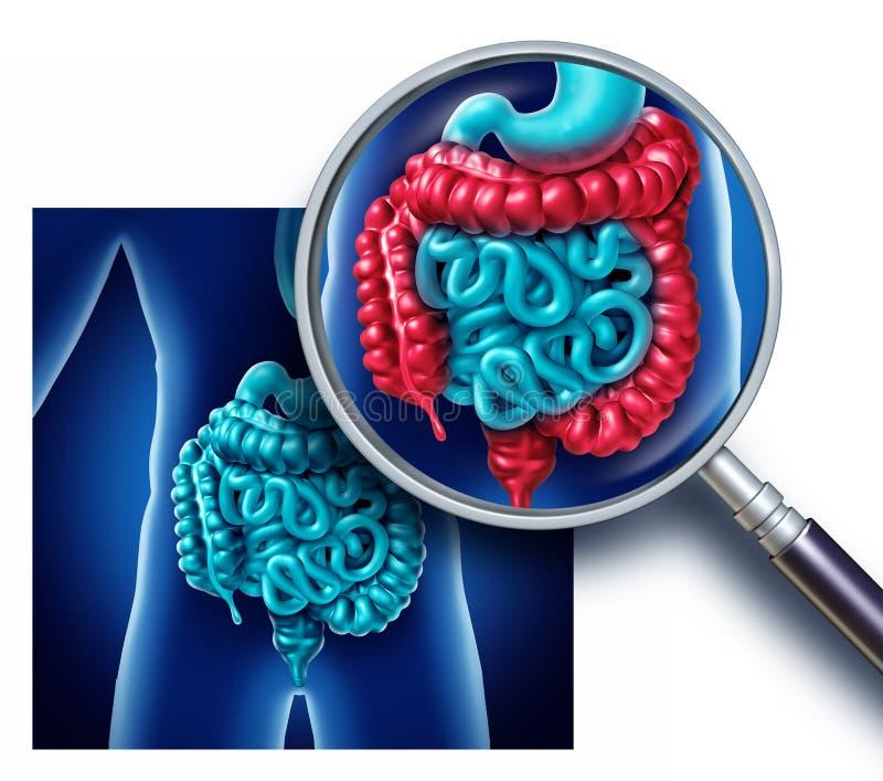 冒号和大肠痛苦 向量例证