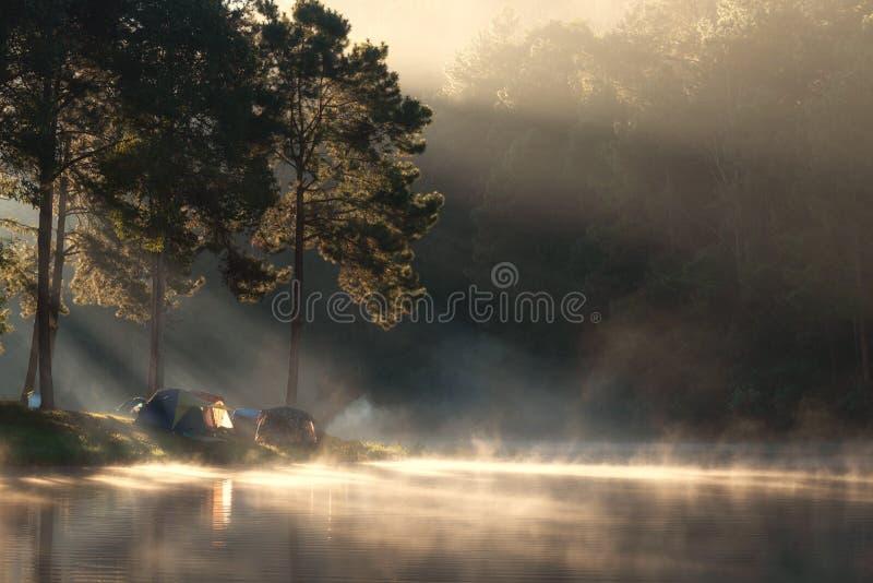 冒险野营的旅游业和帐篷在看法杉木森林下在水附近环境美化室外在早晨和日落天空在剧痛ung, 库存照片