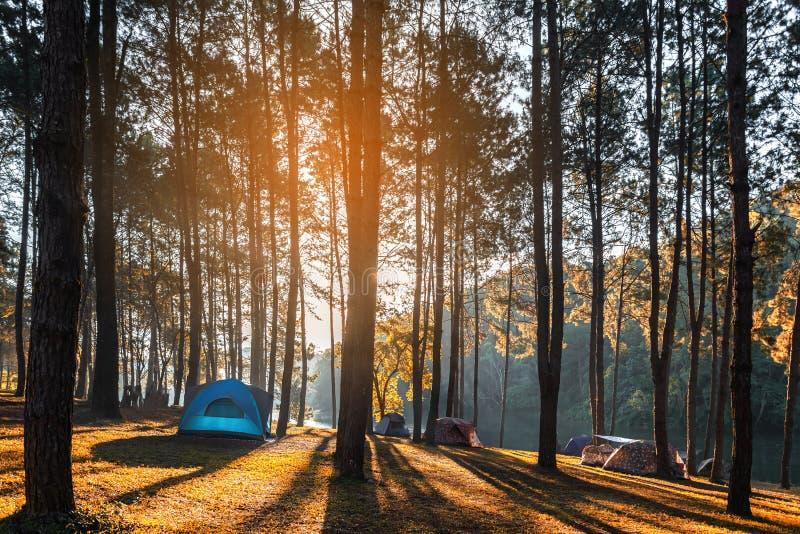 冒险野营的旅游业和帐篷在看法杉木森林下在水附近环境美化室外在早晨和日落天空在剧痛ung, 免版税库存照片