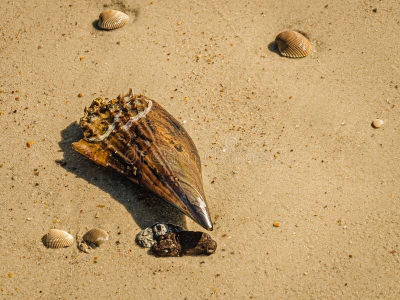 写作壳和扇贝在海滩 图库摄影