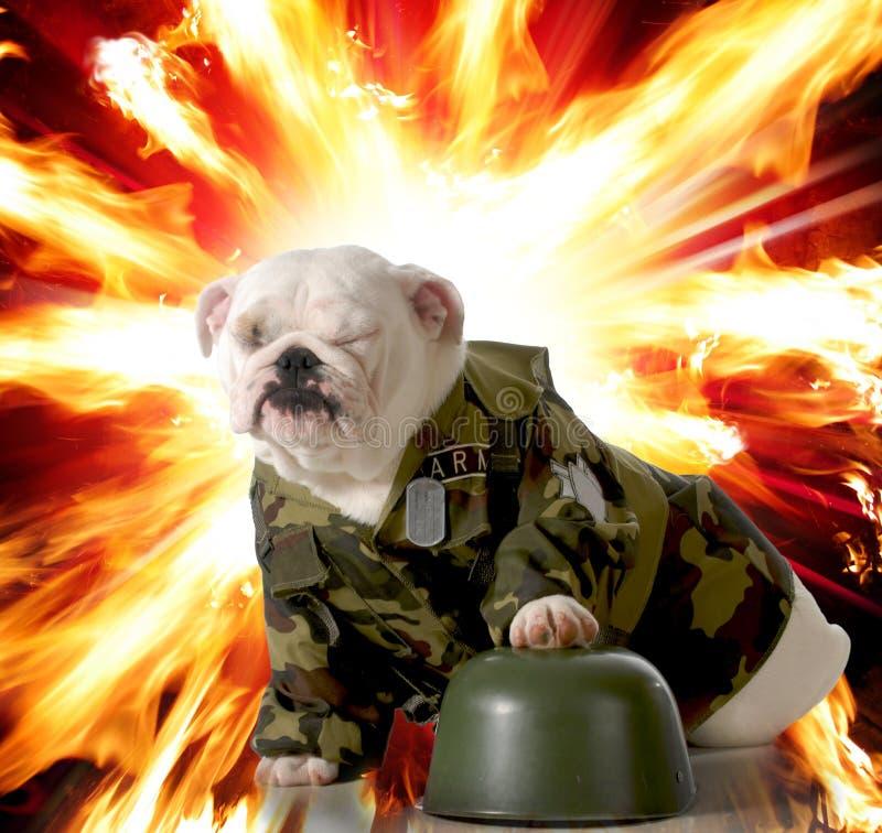 军事狗 免版税库存图片