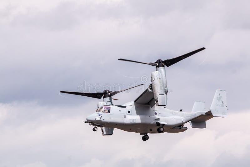 军用V-22白鹭的羽毛飞机 图库摄影