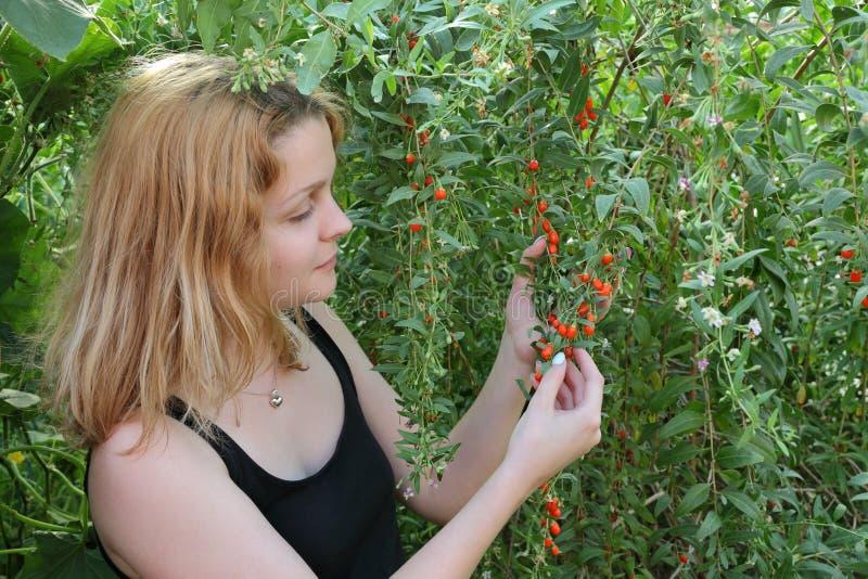 农业、goji莓果和女孩 免版税库存照片