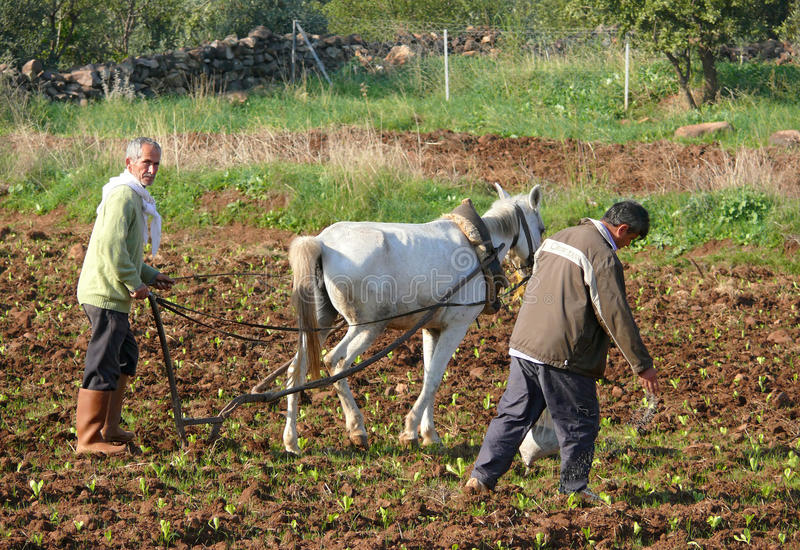 农业。土耳其。 免版税库存照片