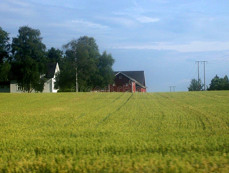 农业农田风景,瑞典 免版税库存图片