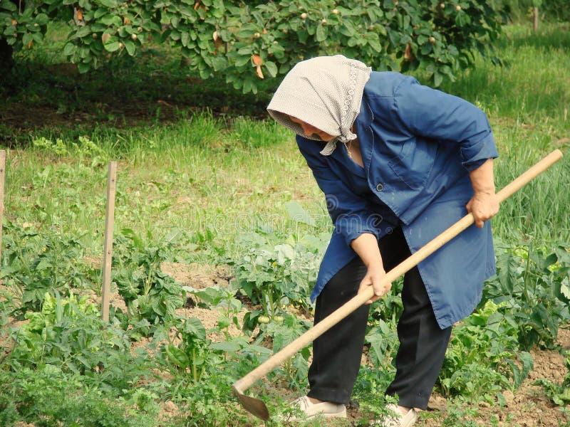 农业劳动 免版税库存图片