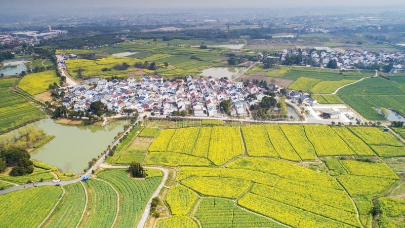 农业南京yaxi国际慢城市油菜牧人的风景 免版税库存图片