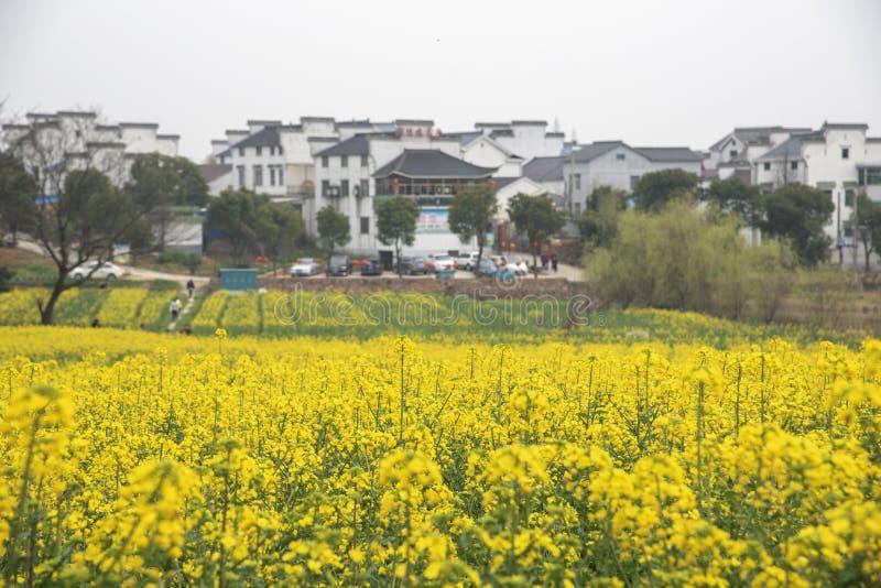 农业南京yaxi国际慢城市油菜牧人的风景 图库摄影