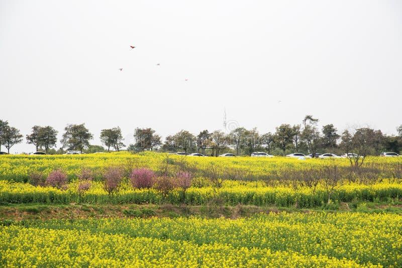 农业南京yaxi国际慢城市油菜牧人的风景 免版税图库摄影